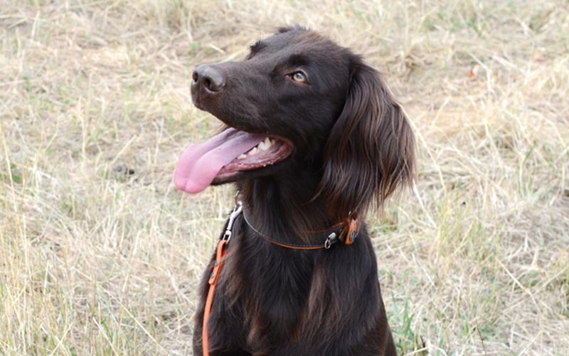 Perspektiere-Hundeerziehungsberatung-einzeltraining