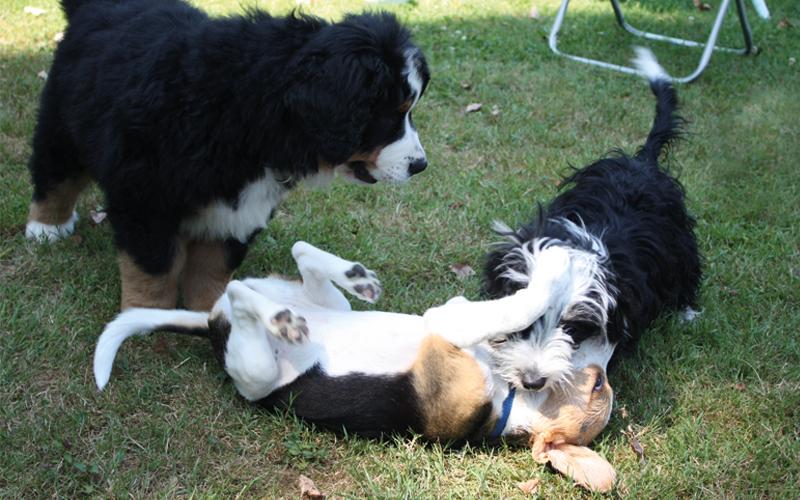 Perspektiere-Hundeerziehungsberatung-junghunde