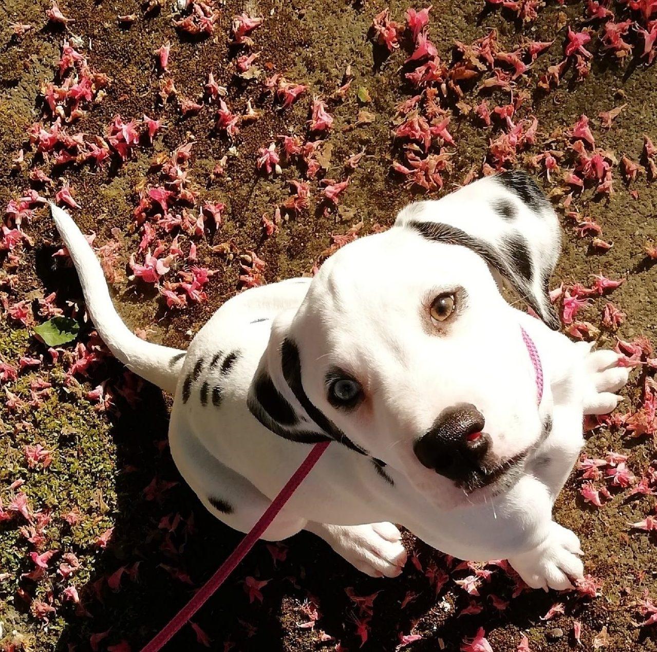 Perspektiere-Hundeerziehungsberatung-kundenstimme2