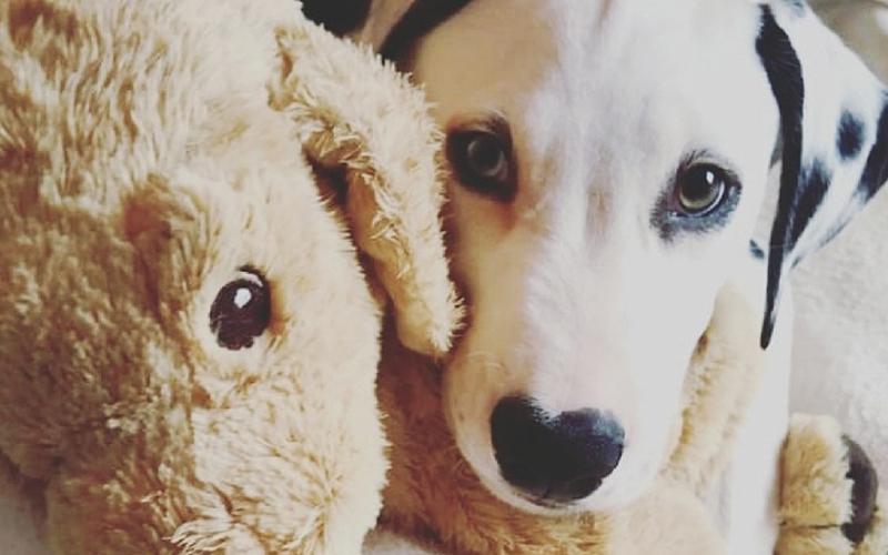 Perspektiere-Hundeerziehungsberatung-welpen