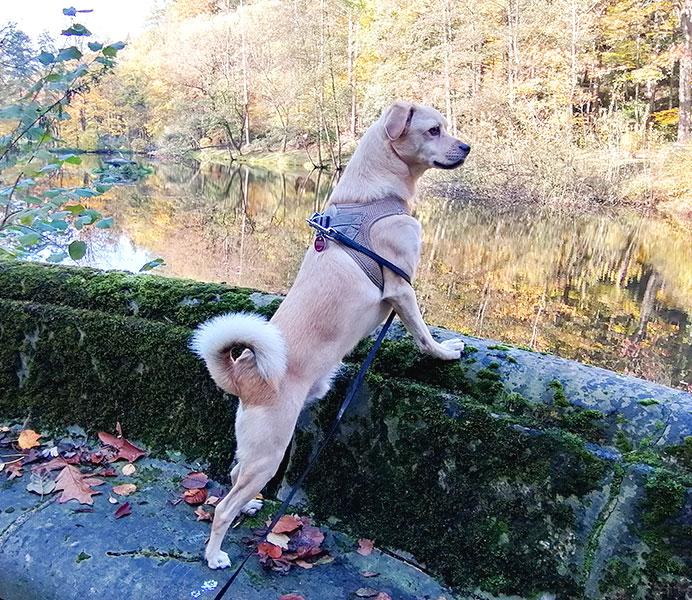 Perspektiere-Hundeerziehungsberatung-kundenstimme4